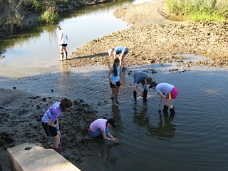 SIMCO students look for organisms at the waters edge